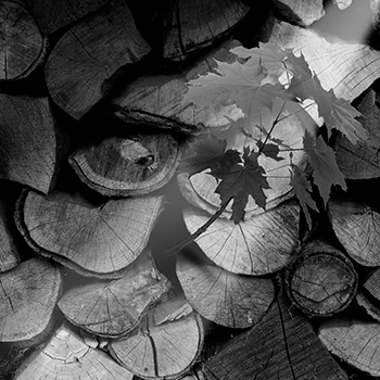 arbol troncos hoja