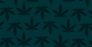 Seminario de Excelencia Cannabis Medicinal: Visión global del negocio