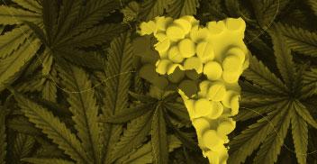 Producción tráfico y políticas de drogas en la región andina