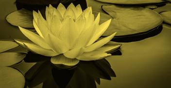 Curso Herramientas filosóficas para el cuidado y el autoconocimiento_ Segunda promoción