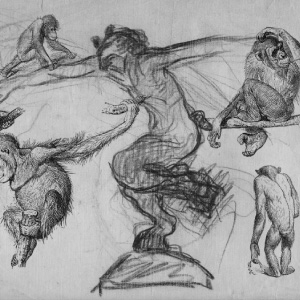 dibujo artes y humanidades